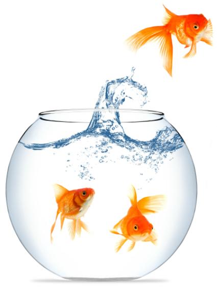 fish_left